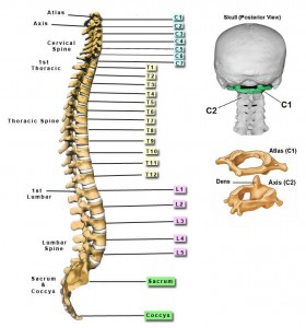 chiropractic negligence compensation